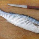 خریدار ماهی کفال
